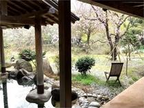 春の桜見温泉