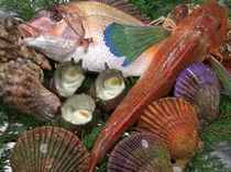 地元で水揚げされた旬の魚介類