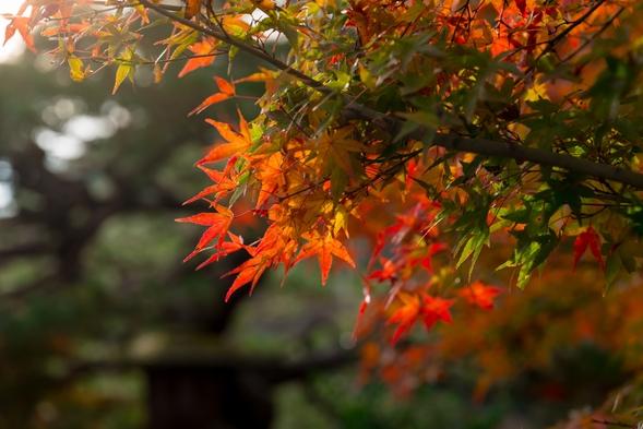 【Signs of Fall】人力車で秋の訪れを感じるプラン(2食付き)
