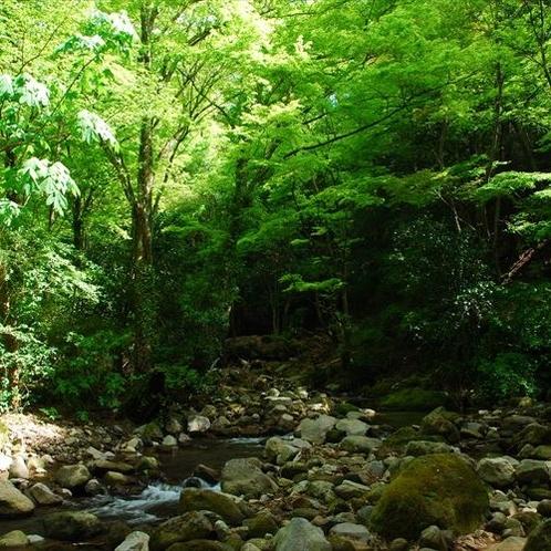 自然豊かな箱根で癒しの休日を