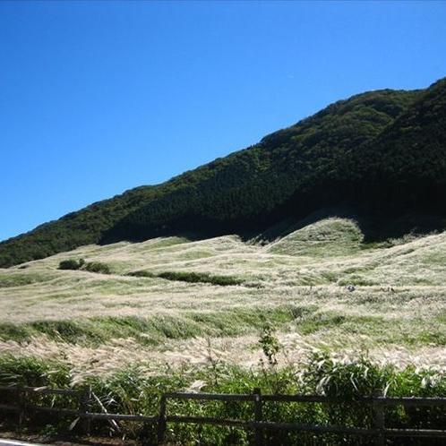 仙石原 すすき高原