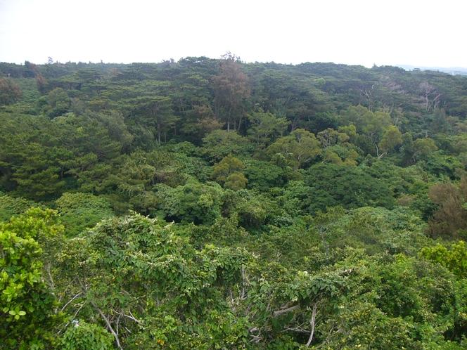 近隣のジャングル