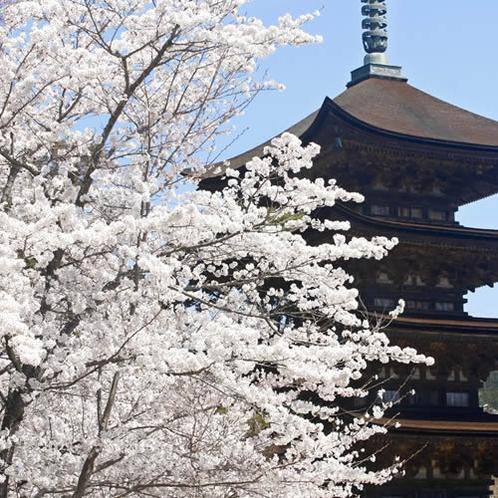 *香山公園・瑠璃光寺の桜 人気のフォトスポットです