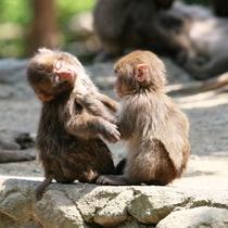 【周辺観光】高崎山自然動物園