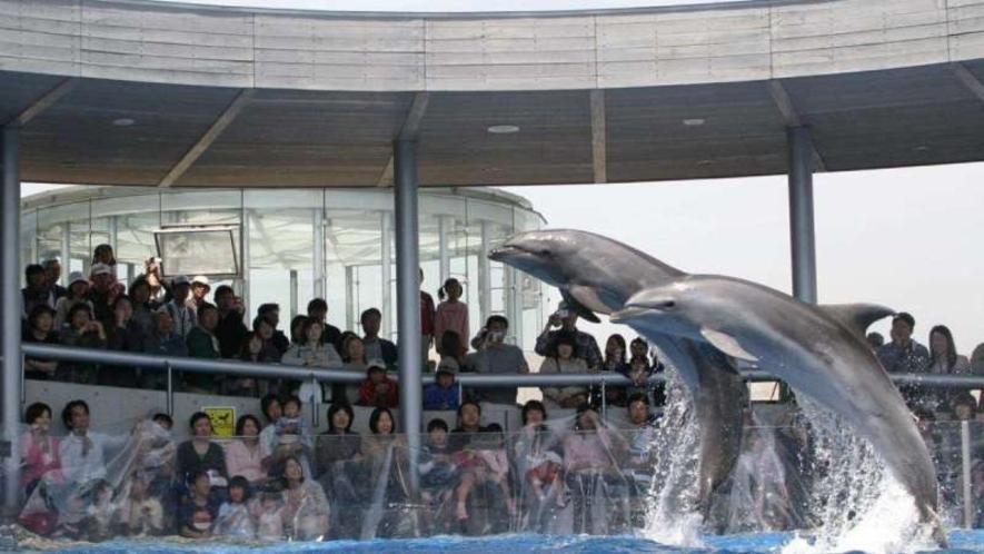"""【うみたまご】動物と""""なかよくなる""""水族館。自然のままの動物たちと触れあえます!"""