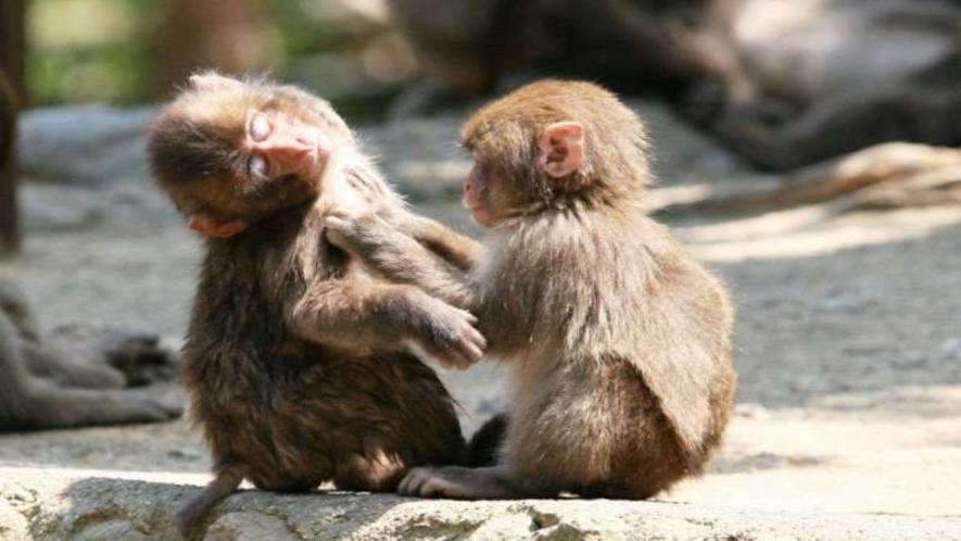 【高崎山自然動物園】大きなオスザルから可愛らしい子ザルまで、野生のサルをすぐ近くで見れます!