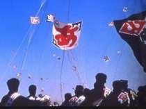 【毎年5月3日~5日】浜松祭り『昼の部』 -凧揚げ合戦-