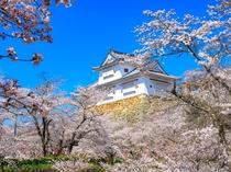 【津山城】「日本さくら名所100選」にも選定されており、春には約千本もの桜が花を咲かせます。