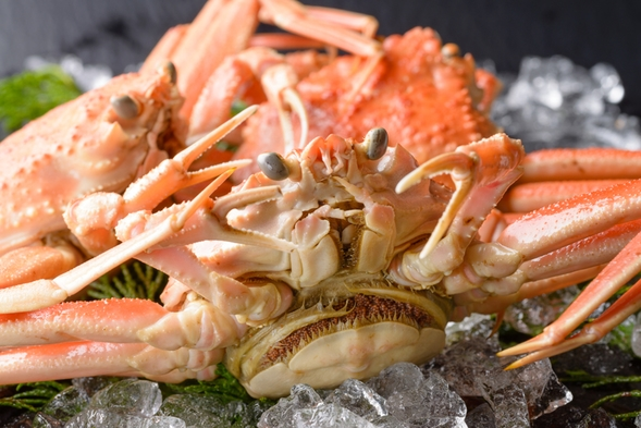 美味しいのは、どっち?≪最高級!幻の間人蟹≫VS≪極上の松葉蟹≫究極の食べ比べプラン!