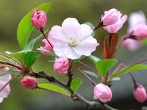 カイドウ 春〜