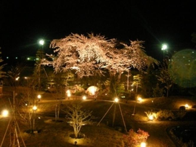 夜景 桜の古木