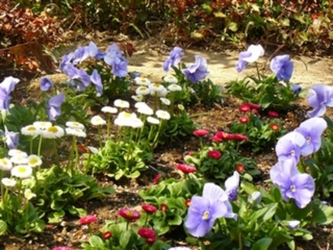 エントランスの花壇2 春の花