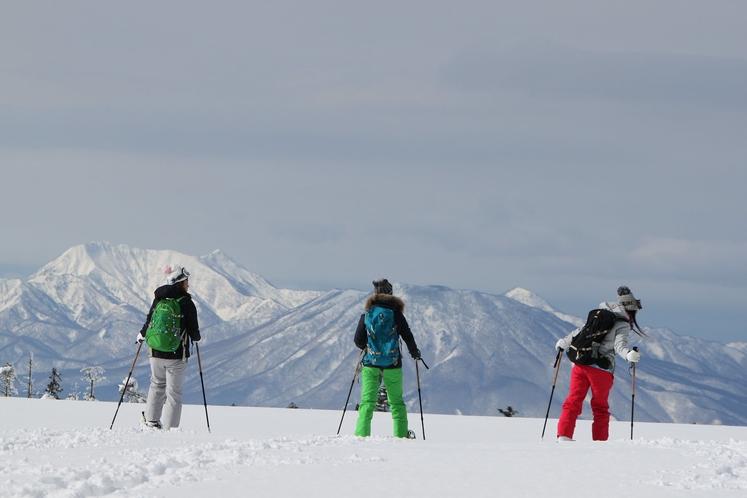 スキー素材