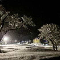 幻想的な雪の世界へ