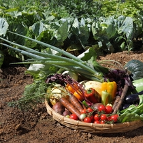 【地元野菜】山形県産の新鮮な野菜を多く使用しております。農家さんが手間暇かけた味をご堪能ください