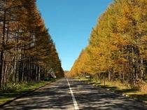 秋:八ヶ岳イエロー