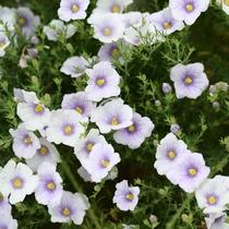 リゾートを彩る花々