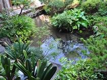 【庭園】鯉がたくさん泳いでいます。