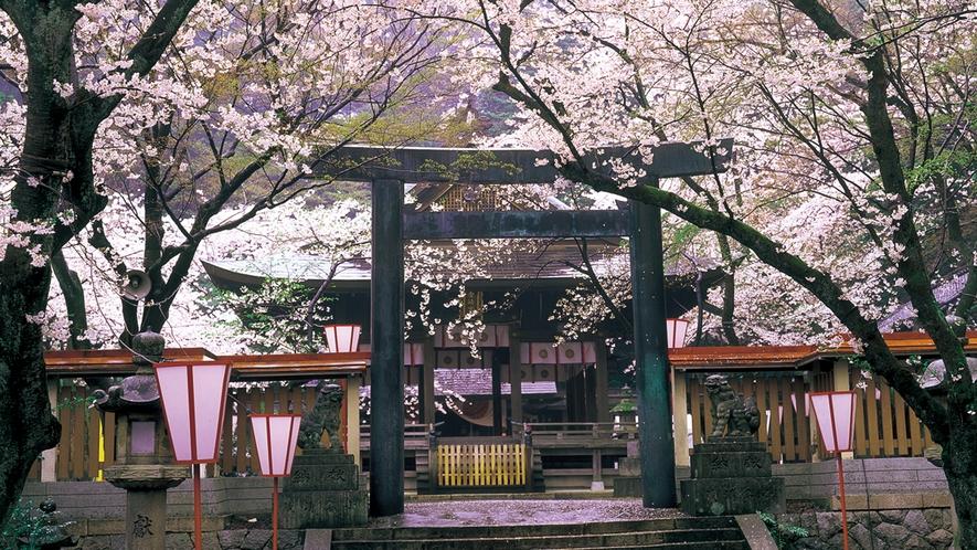 金崎宮 桜