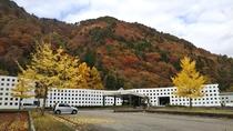 *【紅葉】当荘からも美しい秋のコントラストを望めます。