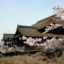 春の清水寺