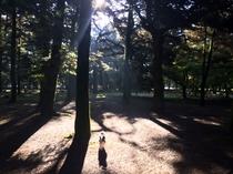 京都御所の林