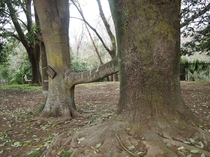 男女共同参画の木