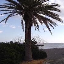 *海岸の風景