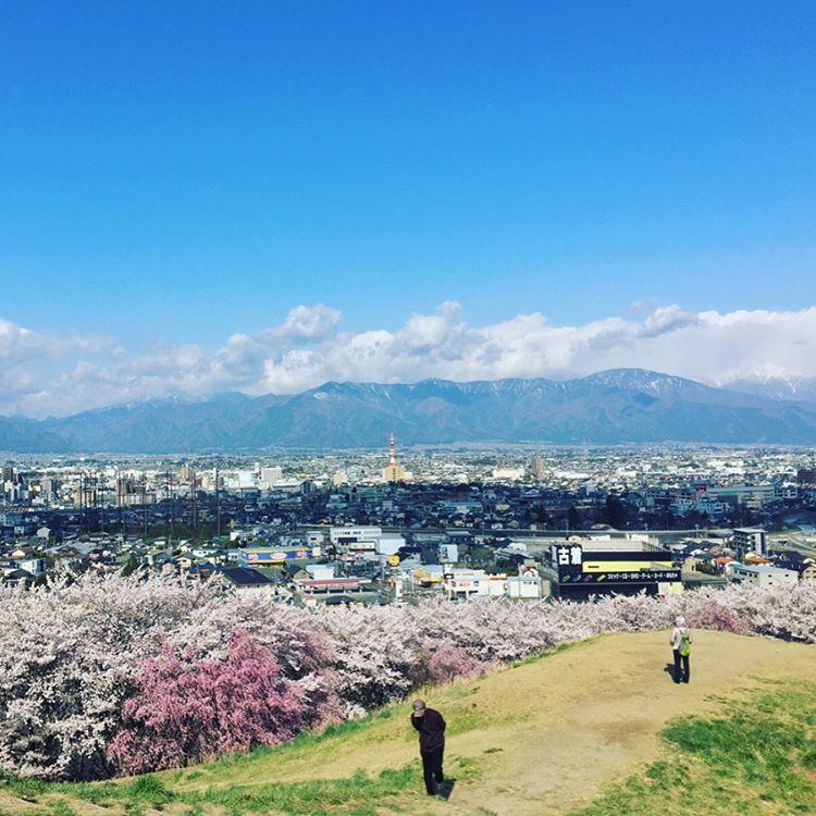 ■桜の名所「弘法山古墳」