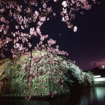 夜桜と彦根城お堀