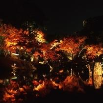 錦秋の玄宮園ライトアップ