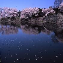 散り桜と彦根城お堀