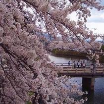 桜シーズンの彦根城お堀