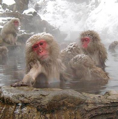 【素泊り】ぶらり旅・渋温泉をのんびり満喫 〜フリースタイルプラン〜