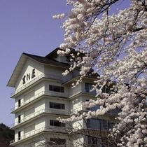 桜と吉川屋外観