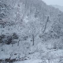 片倉山の雪化粧