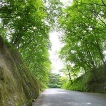 緑水亭へと続く坂道2
