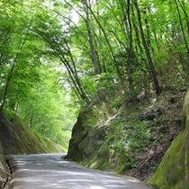 緑水亭へと続く坂道1