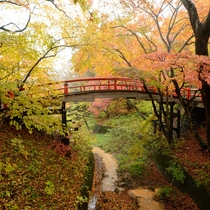 【河鹿橋】当館より徒歩20分。毎年秋になるとライトアップされた紅葉を楽しめる名所です。