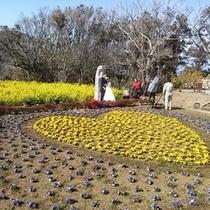 恋人岬の花畑