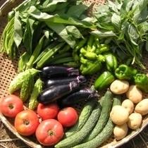 自家栽培野菜