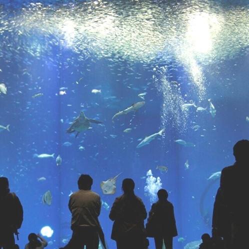 【アクアワールド】出会いの海の大水槽