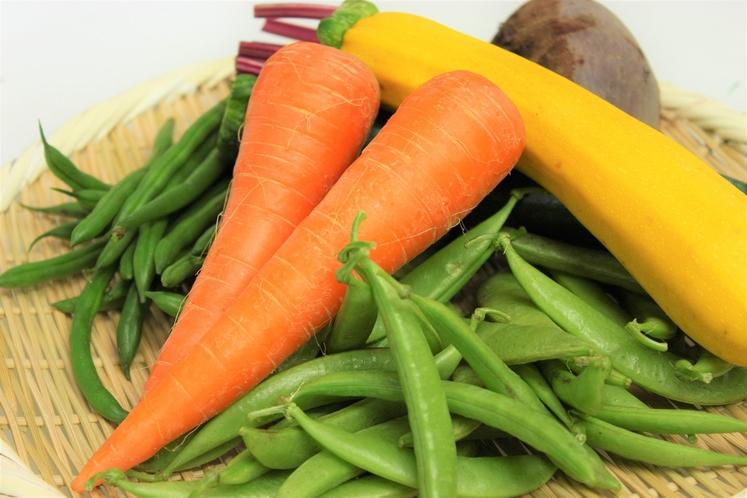 茨城の有機野菜