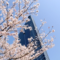ホテル外観 桜