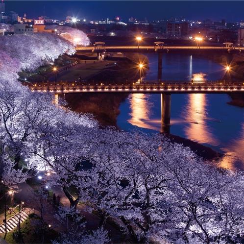 足羽川の夜桜