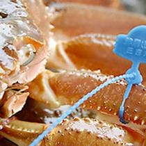 【ブランド蟹!】青いタグが津居山ガニのブランドの証!!