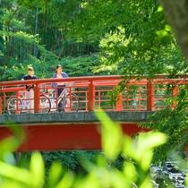 修善寺サイクリング