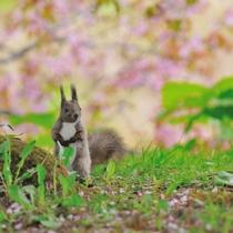◆エゾリス(春)