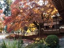 【雷山千如寺大悲王院】糸島地区にある人気紅葉スポット。天神からは車で約1時間