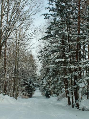 森の小道(冬)